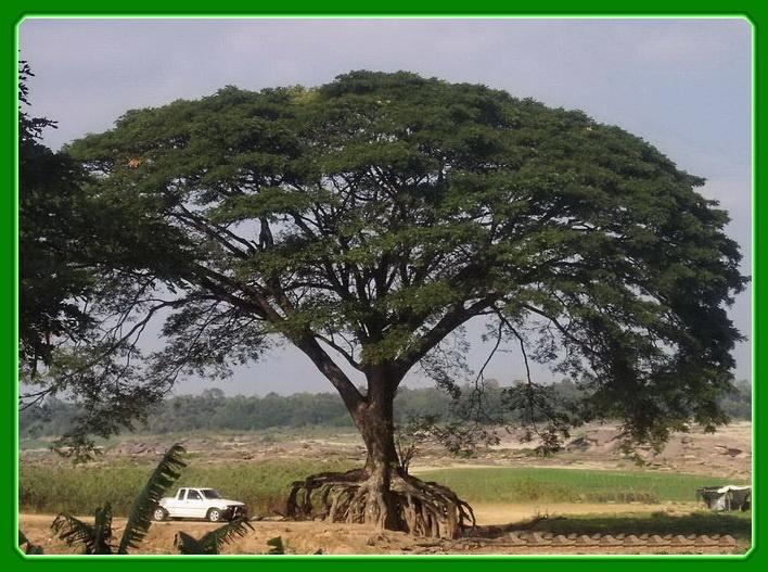 grosser Baum im vergleich mit kleinem pickup