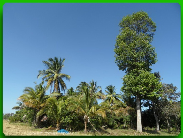 Grüne Palmen und hoher Baum