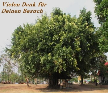 Kontaktbild Baum