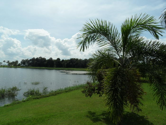 golfrasen am stausee mit palme