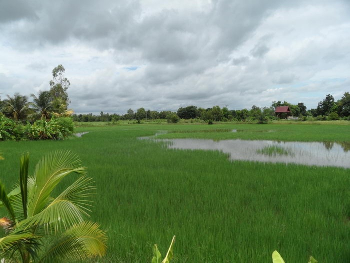 Reifeld teilweise überschwemmt