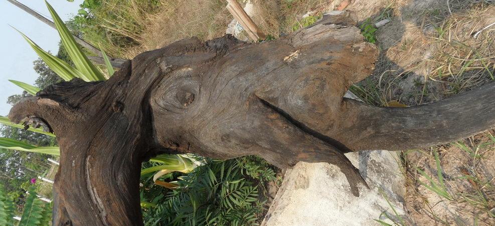 holzast sieht aus wie elefant