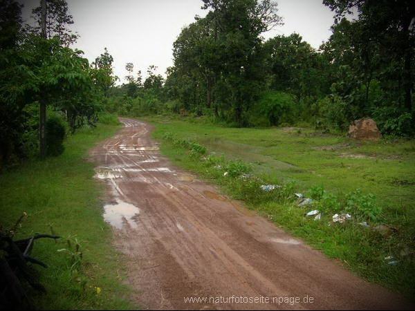 vorher schmale naturstrasse