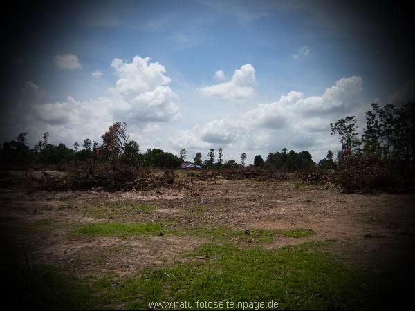 ein grosses stück urwald ist verschwunden
