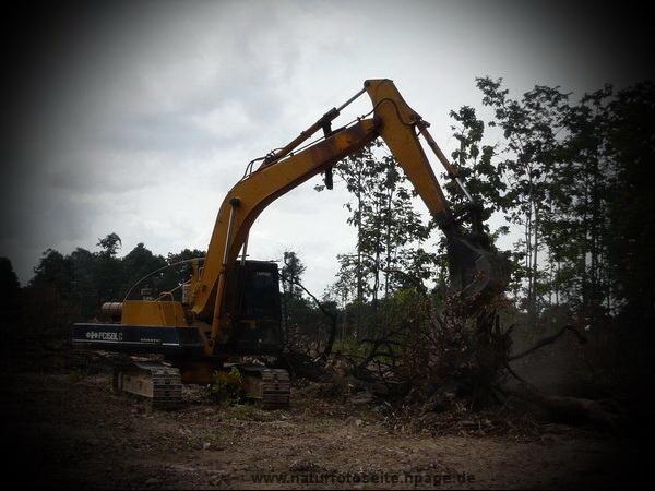 bagger fällt bäume