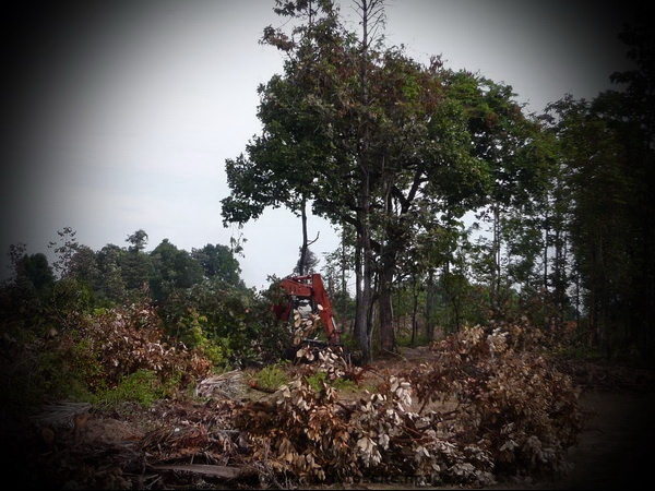 kleiner bagger im urwald