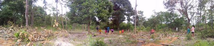 panorama leute arbeiten im urwald