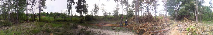 holzsägen im urwald
