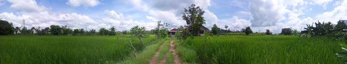 panorama reisfelder