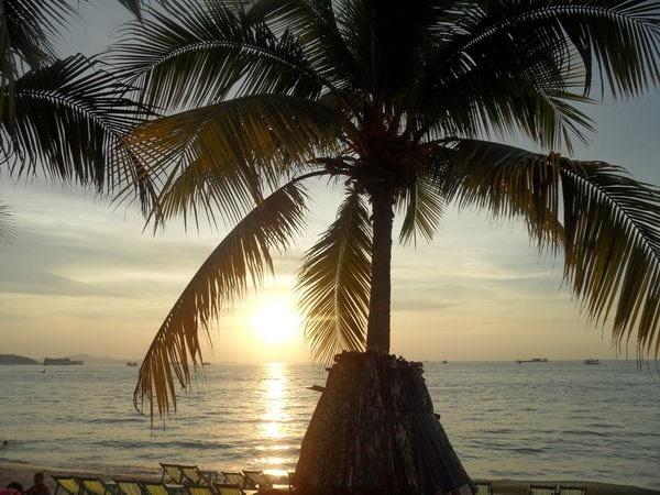 sonnenuntergang hinter palme